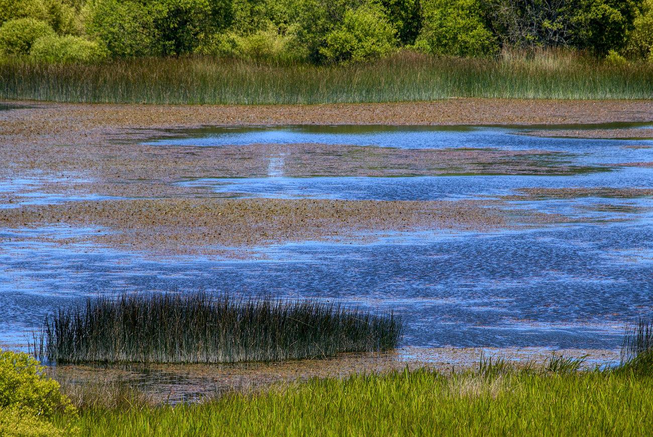 Aguas de la laguna de Cospeito, Lugo