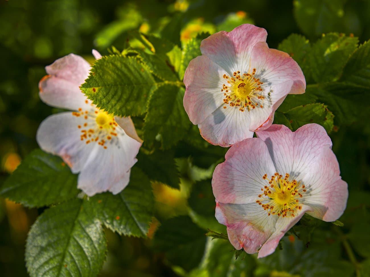 flora de Laguna de Cospeito
