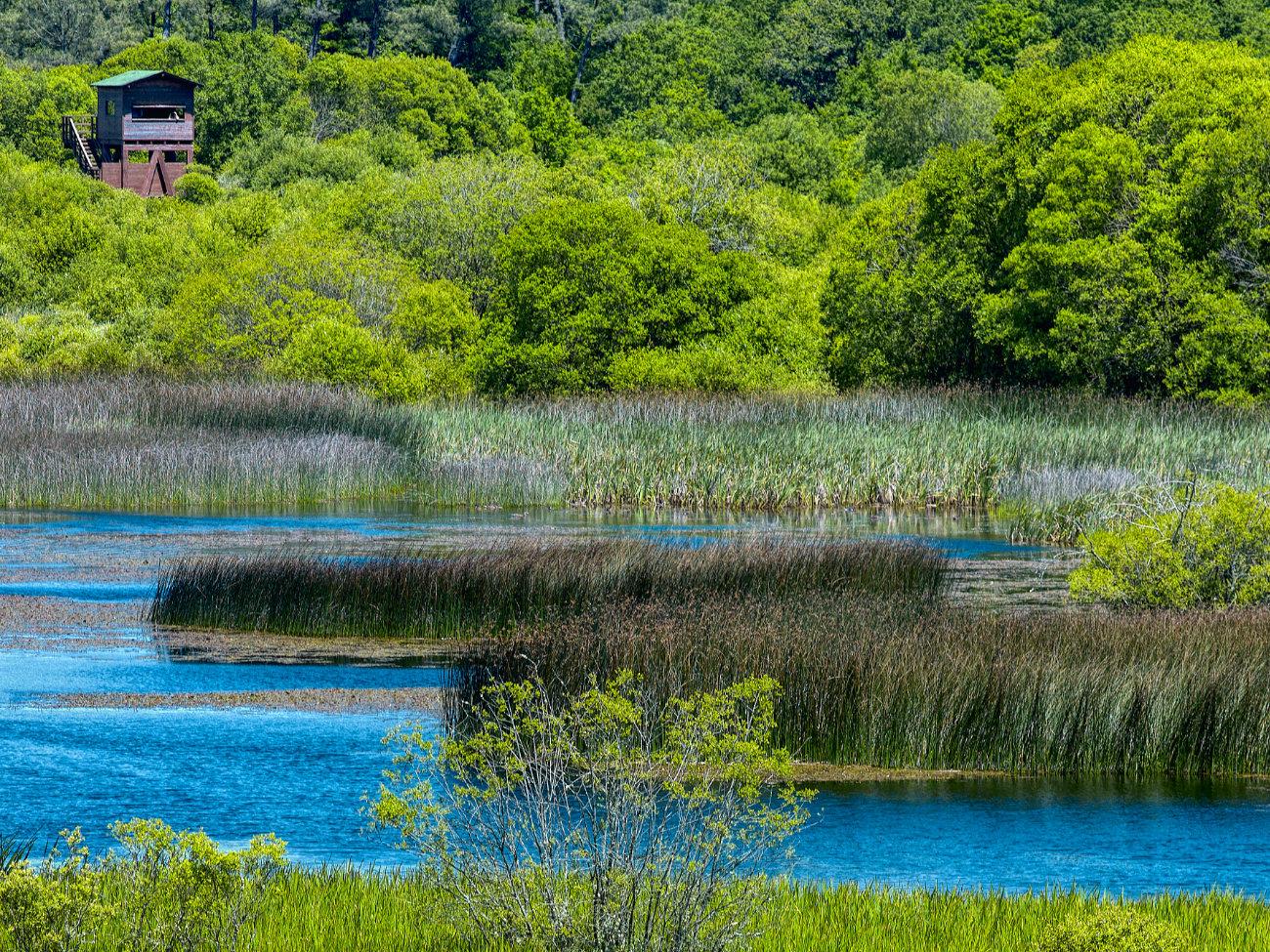 Un día en la laguna de Cospeito, Lugo