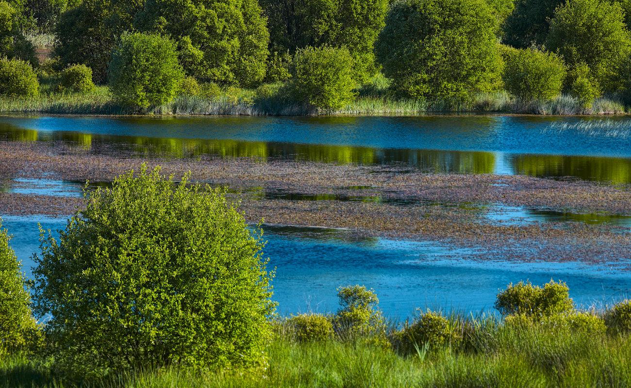 Reflejos en Laguna de Cospeito, Lugo