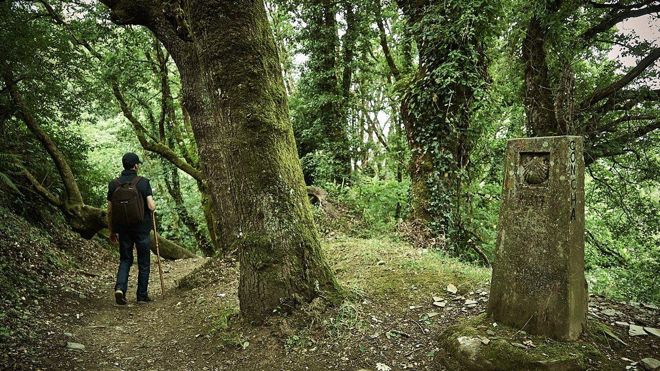 Bosque de Sobredoval-Sarria