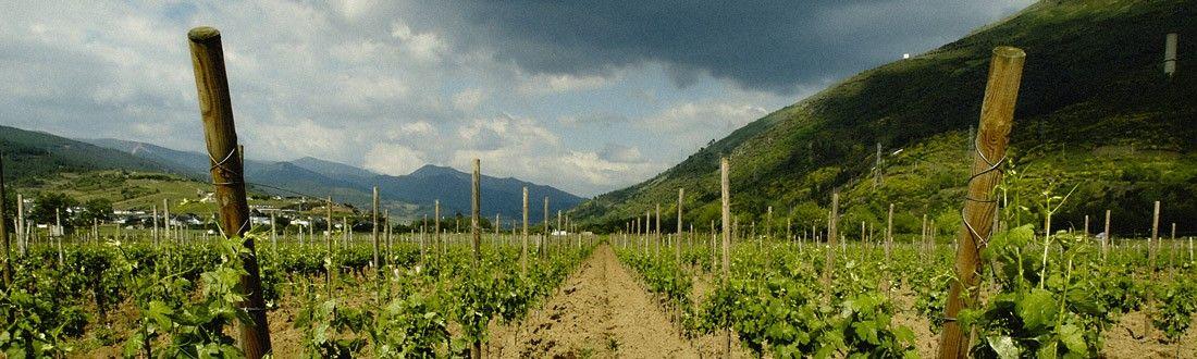 Viñas de Valdeorras