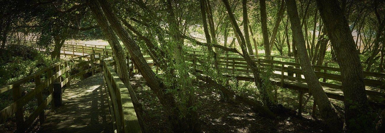 Senda verde del Xares
