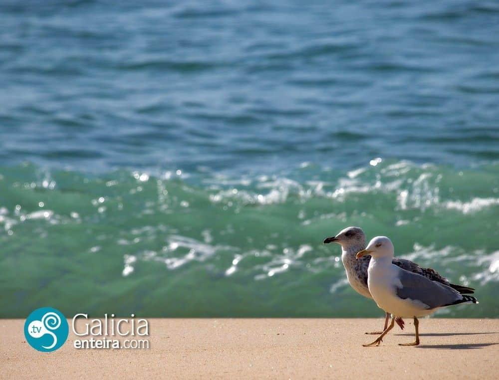 Playa de Areas - Sanxenso - Pontevedra