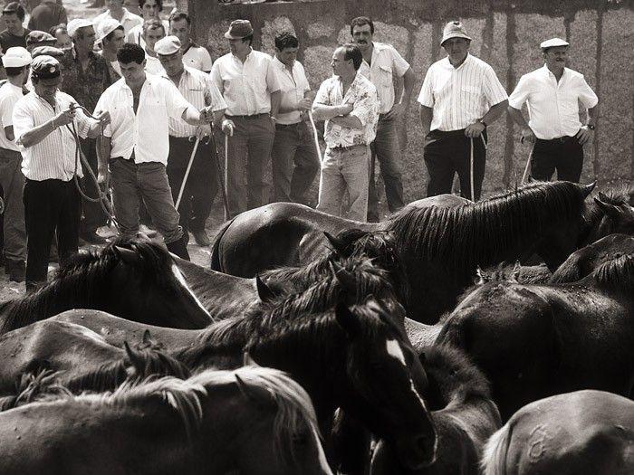 Curro de San Cibran - Gondomar