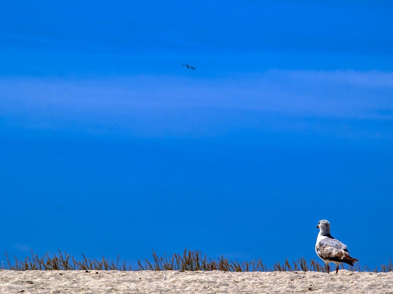 Playa de Rodas – Cies