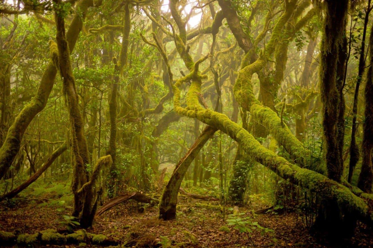Parque Nacional de Garajonay Canarias