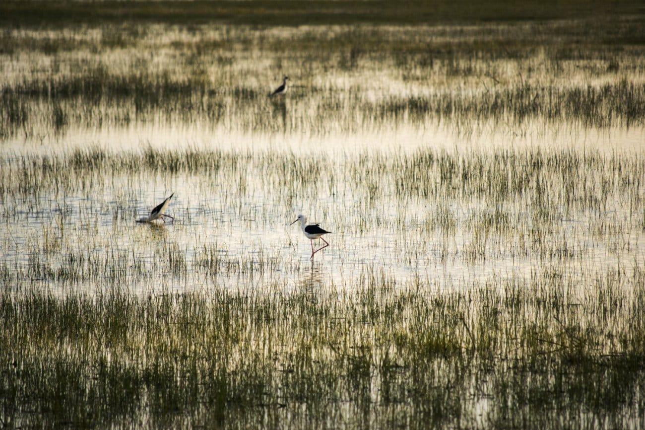 Qué ver en Andalucía: Parque Nacional de Doñana Andalucia