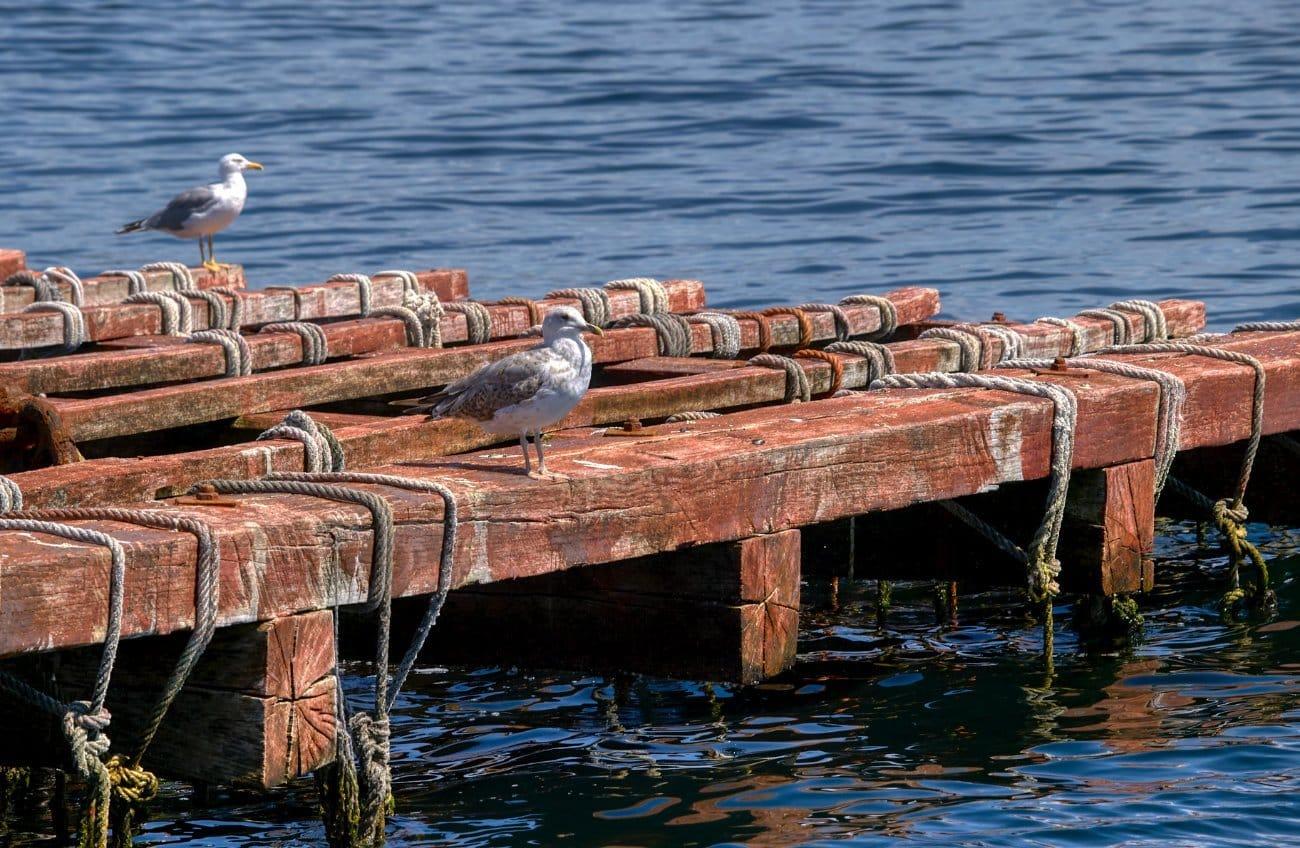 Qué ver en Vigo: Batea Ria