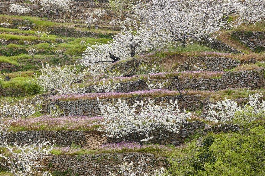 Valle del Jerte en primavera