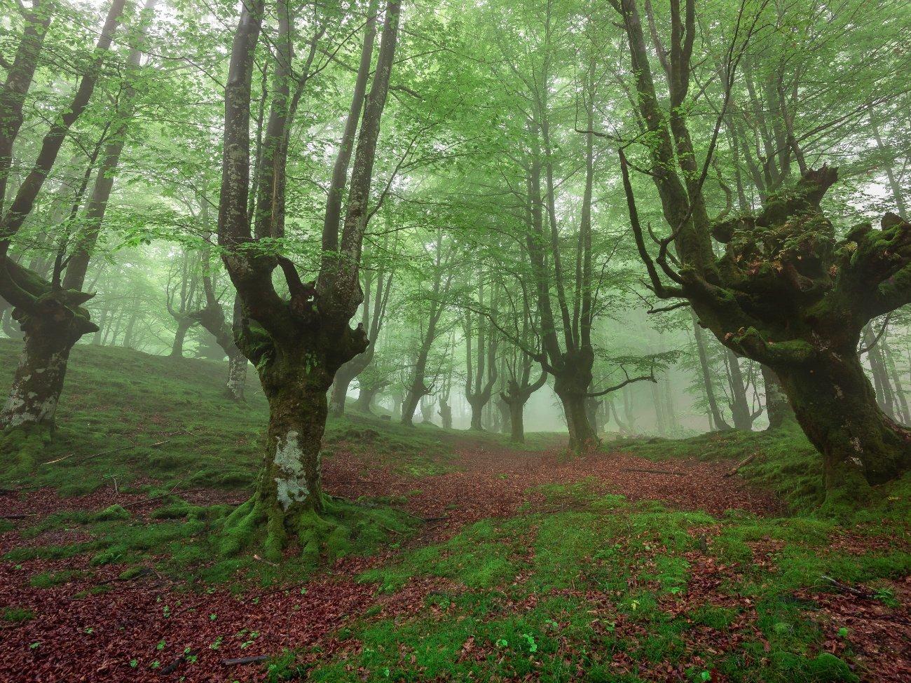 Parque Natural de Gorbeia