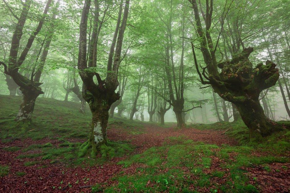Qué ver en el País Vasco: Parque Natural de Gorbeia