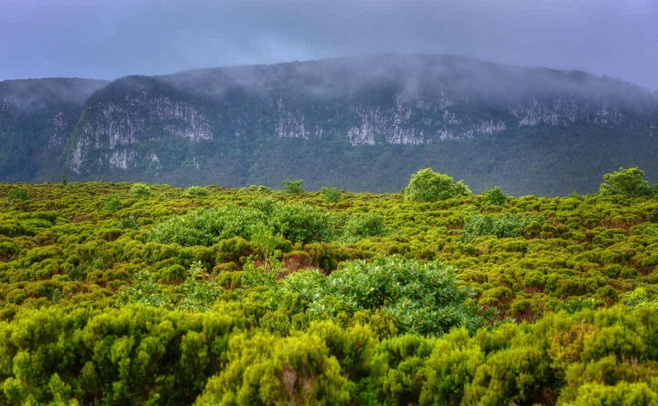 Reserva Natural Geológica Algar do Carvão Azores Terceira